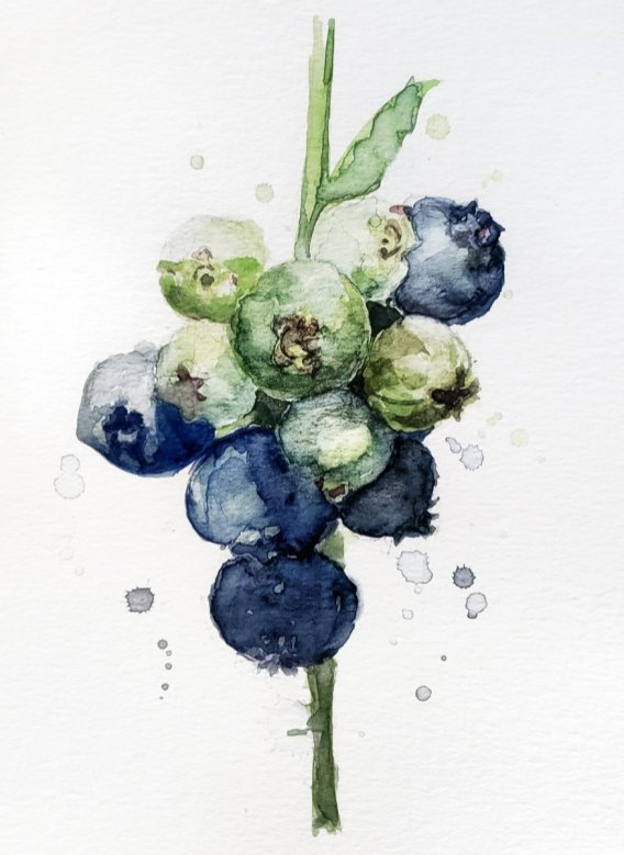 Blueberries Watercolor Painting