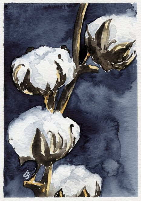 Cotton Watercolour Painting