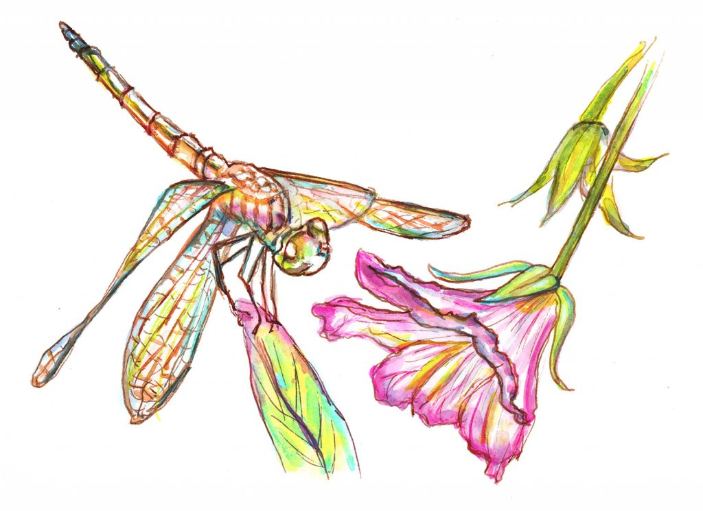 Dragonfly And Flower Watercolor Sketch