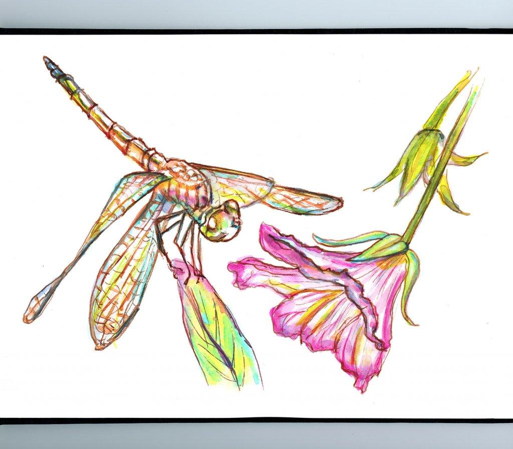 Dragonfly And Flower Watercolor Sketch Sketchbook Detail