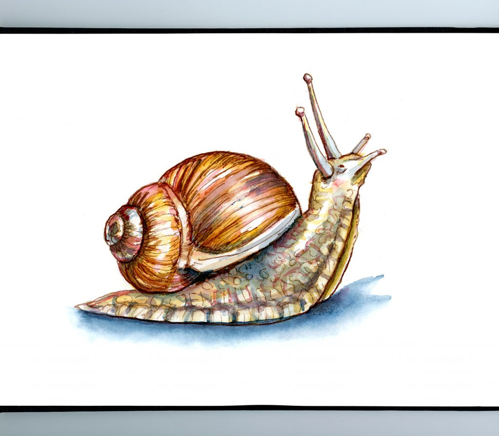 Snail Looking Up Watercolor Painting Sketchbook Detail