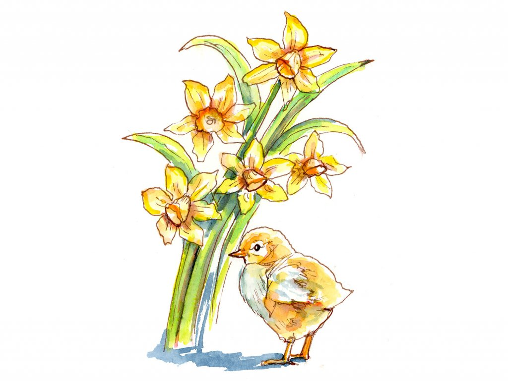 Baby Chick And Daffodils Watercolor Painting