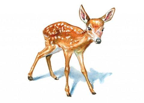 Baby Deer Fawn Watercolor Painting