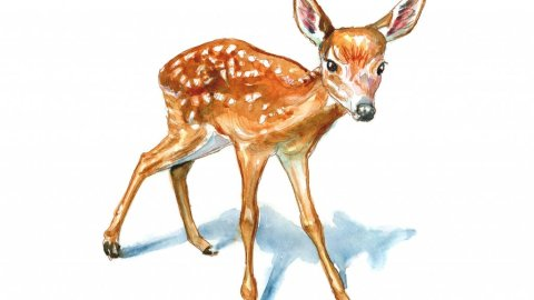 Baby Deer Fawn Watercolor Painting