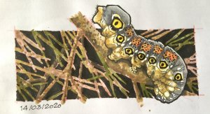 14/03/2020 Caterpillar F1CD25E8-A2CB-4457-B458-A16A82A2C948