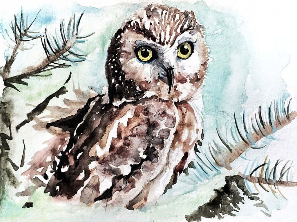 Owl Watercolor Painting by Jenny Tran