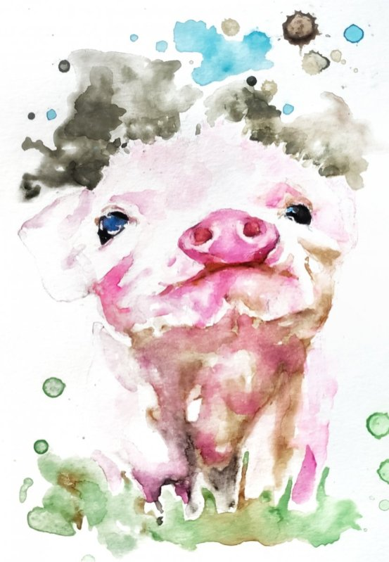 Pig Watercolor Painting by Jenny Tran