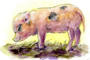 Piglet-#PostcardsForTheLunchBag #DanielSmithArtistMaterials Did you know that pigs prefer to sleep n