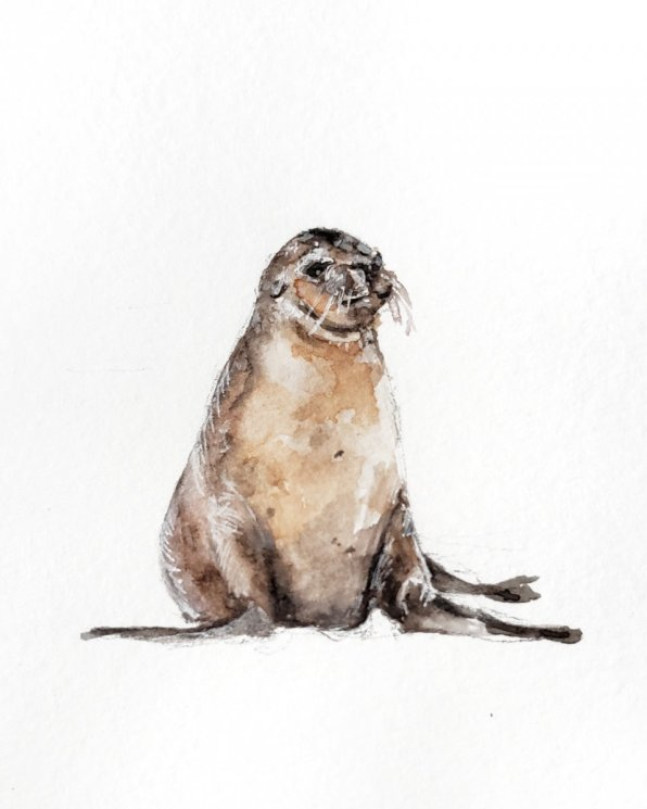 Seal Watercolor Painting by Jenny Tran
