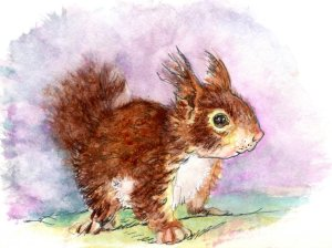 Squirrel Kit – Did you know that squirrels have been known to chew shed rattlesnake skin, then