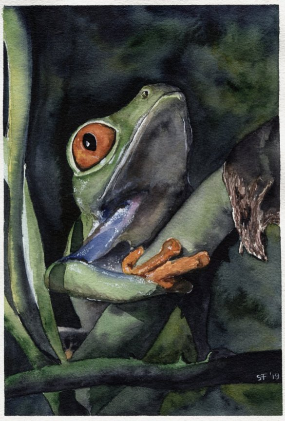 Tree Frog Watercolour Painting