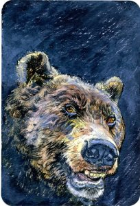 Bear Market #PostcardsForTheLunchBag Some people feel the terms 'Bear' and 'Bull&#
