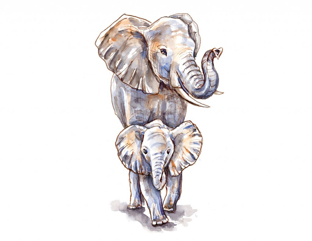 Baby Elephant And Mother Watercolor Illustration