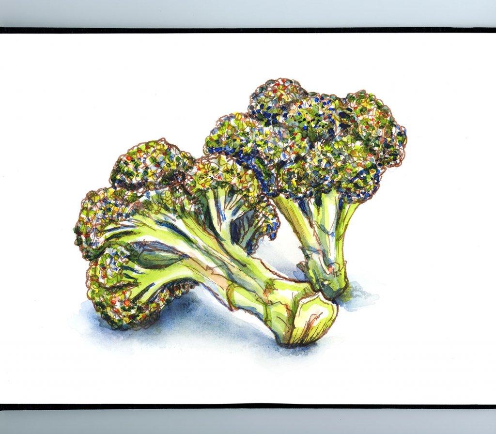 Broccoli Florets Watercolor Illustration Sketchbook Detail