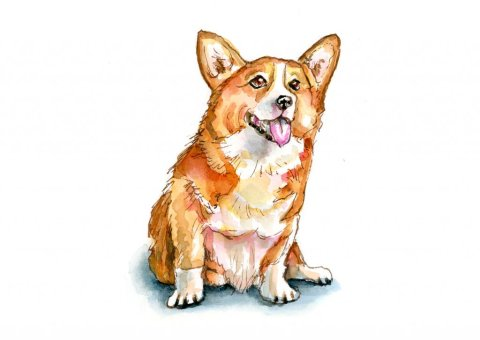 Corgi Dog Puppy Watercolor Painting