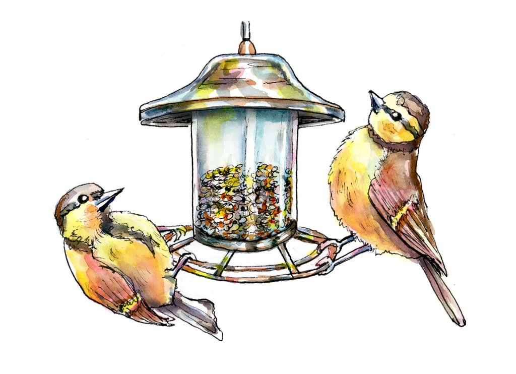 Draw A Bird Day 2020 Bird Feeder Watercolor Painting