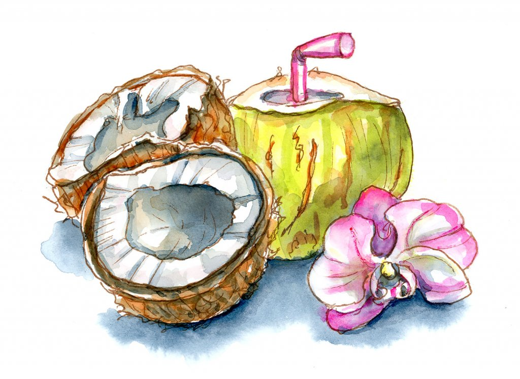 Coconuts Young Water Orchid Watercolor Illustration