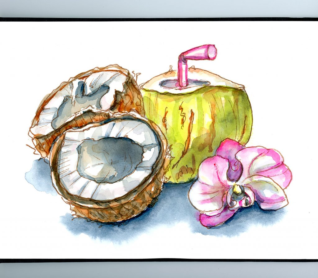 Coconuts Young Water Orchid Watercolor Illustration Sketchbook Detail