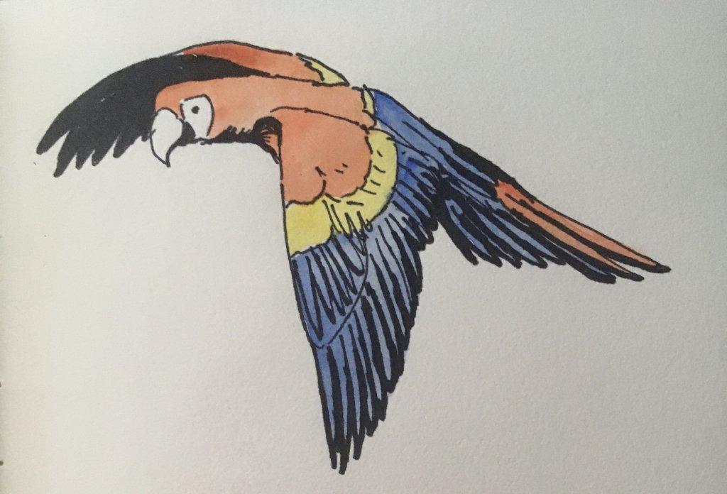 Day 18 scarlet macaw A15D96EB-F060-4551-AF77-40F8765005BD