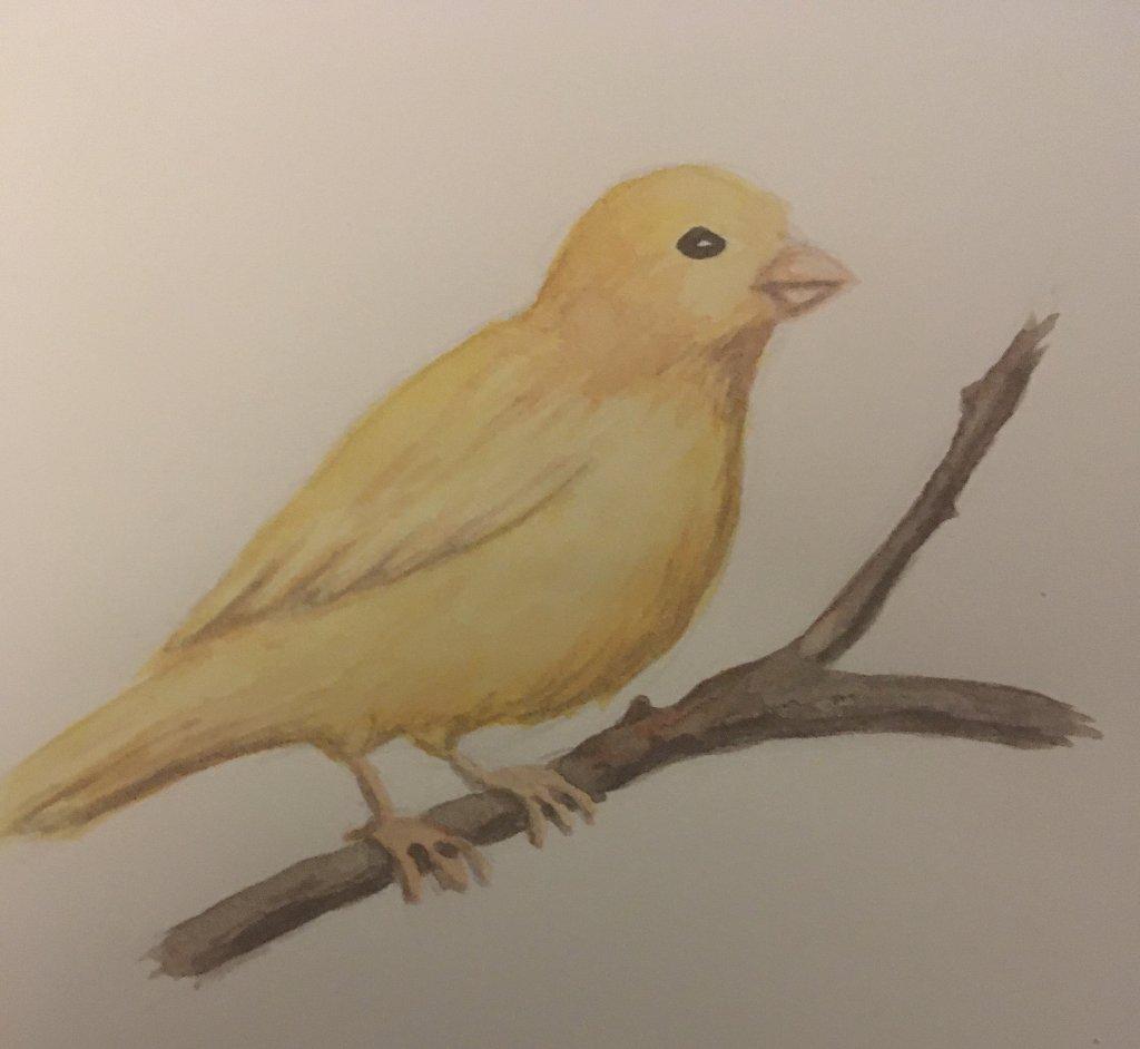 Day 8 canary B0845AE5-74B6-4942-8311-37C1BCAE1A28