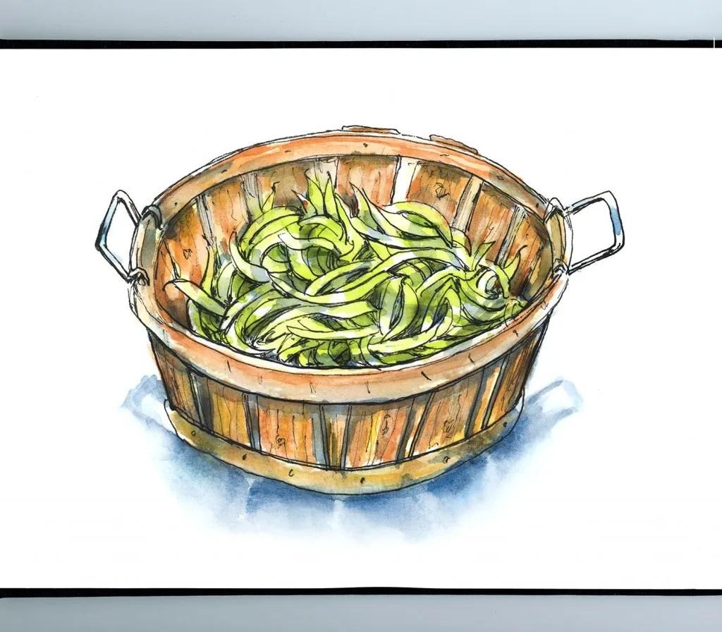 Green Beans Farm Wooden Bucket Watercolor Illustration Sketchbook Detail