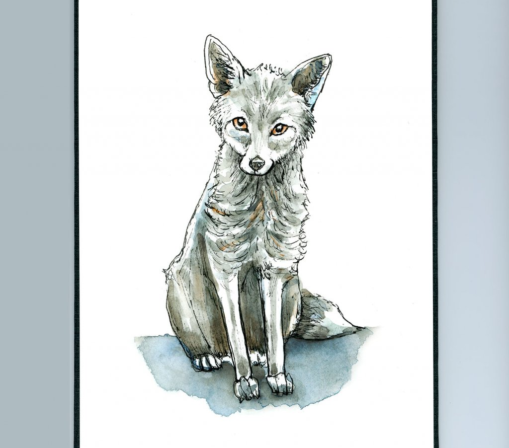 Silver Fox Watercolor Illustration Sketchbook Detail