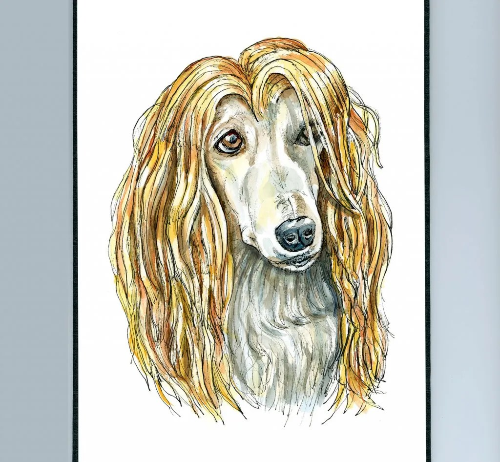 Afghan Hound Blonde Hair Watercolor Illustration Sketchbook Detail