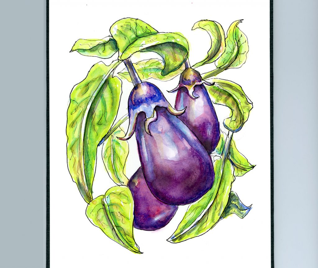 Eggplant On The Vine Watercolor Illustration Sketchbook Detail