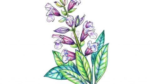 Sage Purple Flowers Watercolor Illustration
