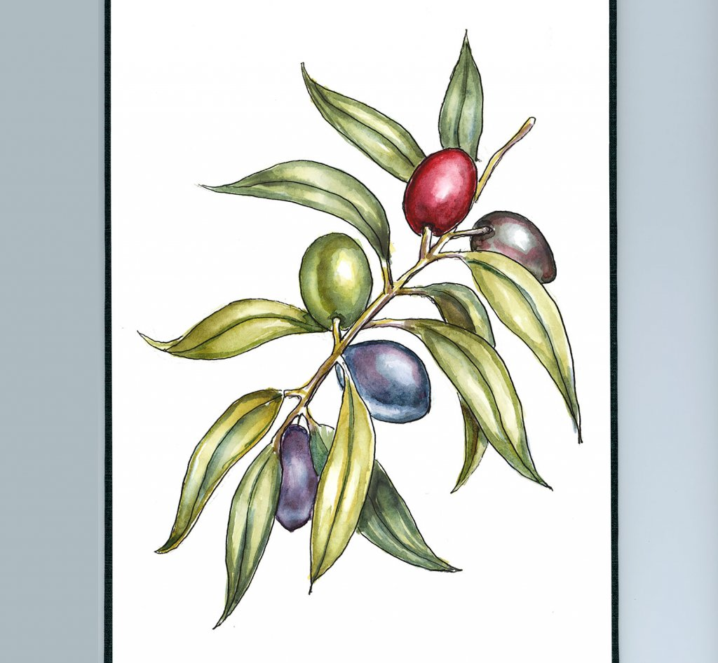 Olive Branch Colorful Watercolor Painting Botanical Illustration Sketchbook Detail