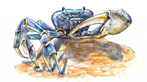 Blue Crab On Beach Watercolor Illustration