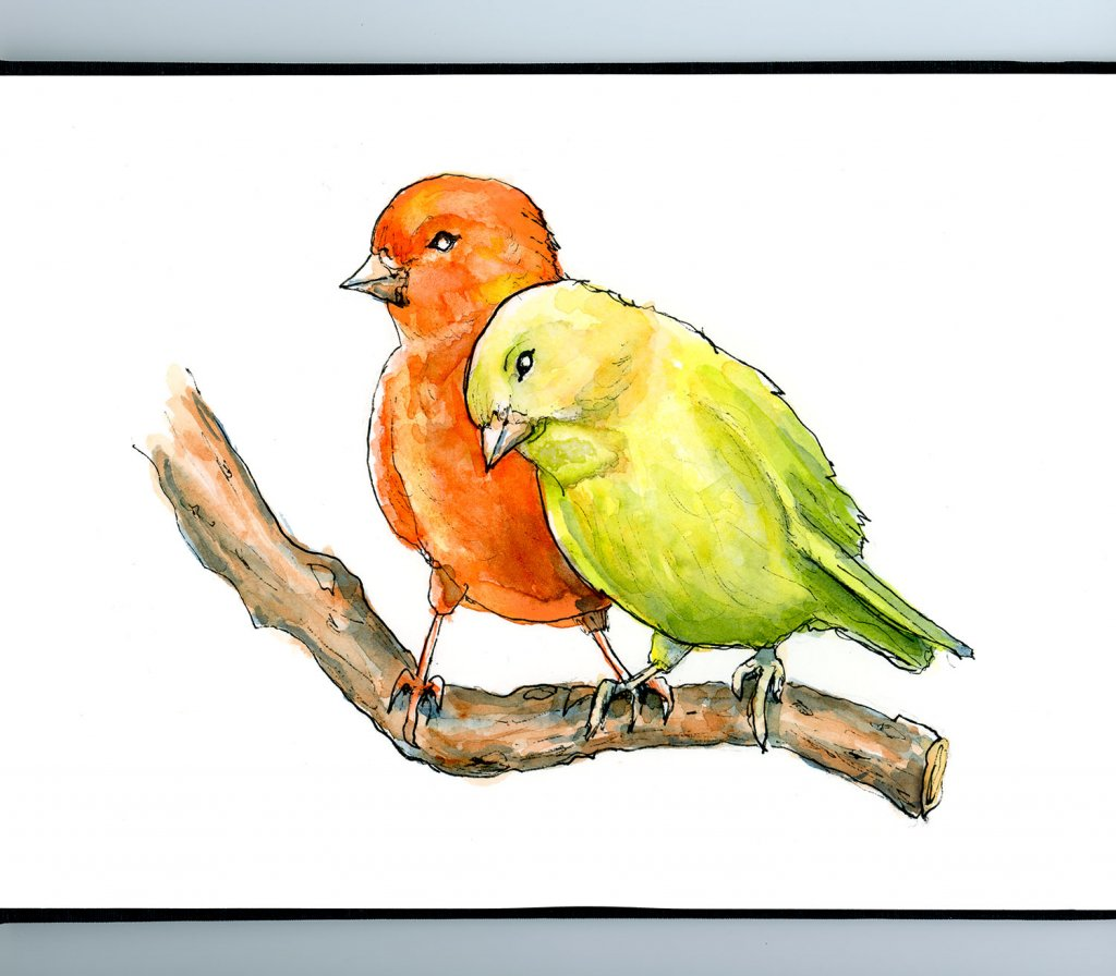Red And Yellow Canary Watercolor Painting Sketchbook Detail