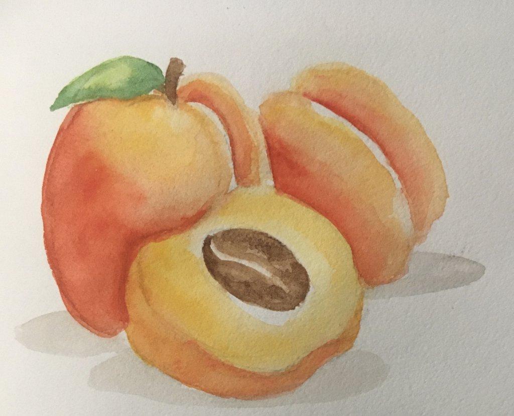 Day 11 apricots E8E515D2-2FA3-4981-8C2B-B6B1E8DC358F