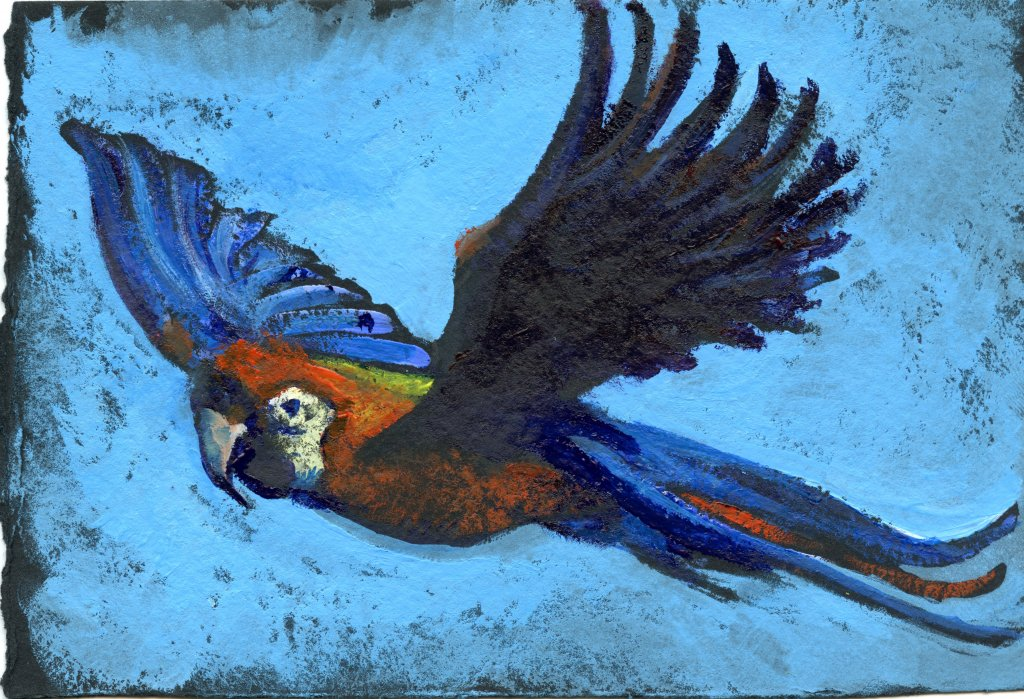 Did you know that the Scarlet Macaw can fly at speeds up to 35 miles an hour? Da Vinci Gouache on St