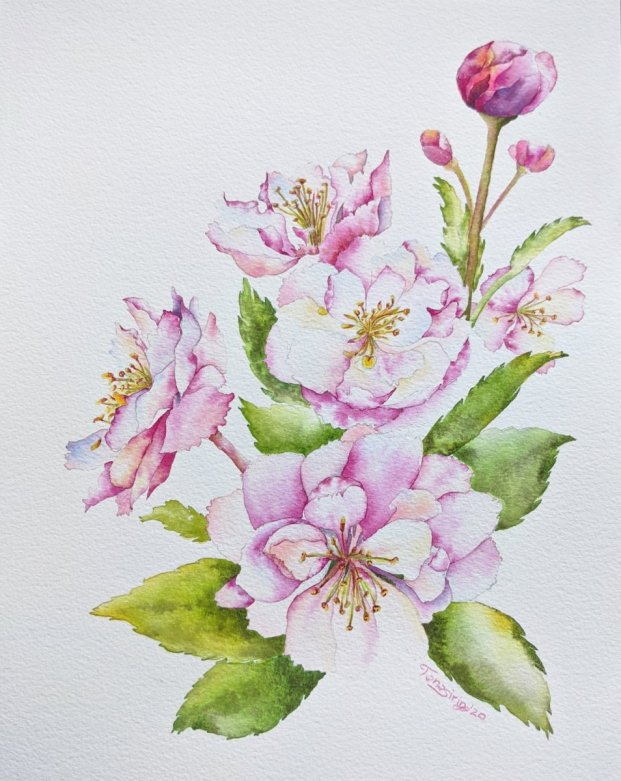 Pink Floral Multiple Flowers Watercolor Painting by Tanasirin