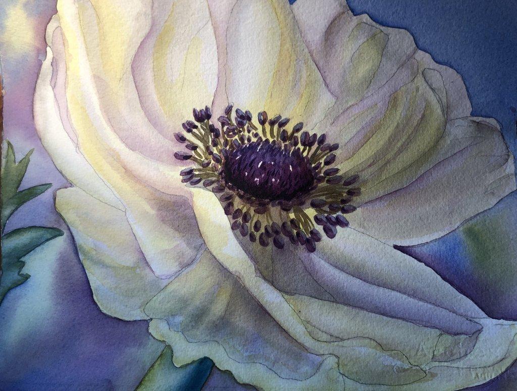 Anemone Flower Anemone