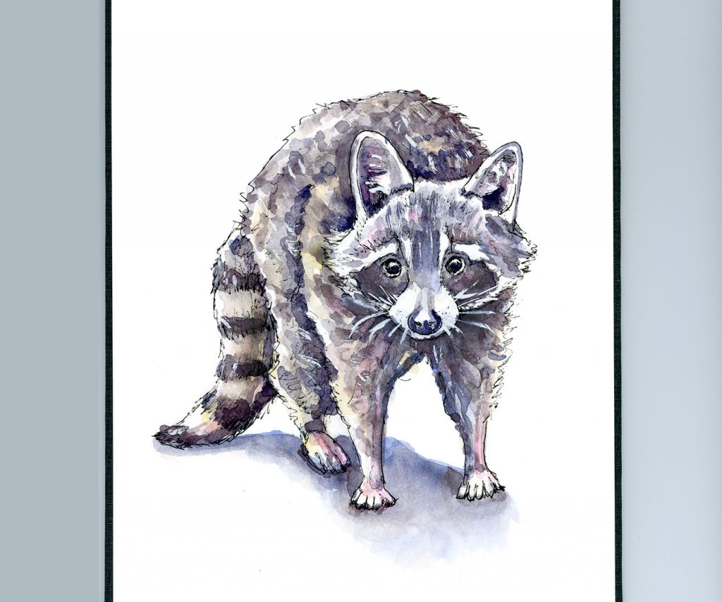 Raccoon Face Standing Watercolor Painting Illustration Sketchbook Revival