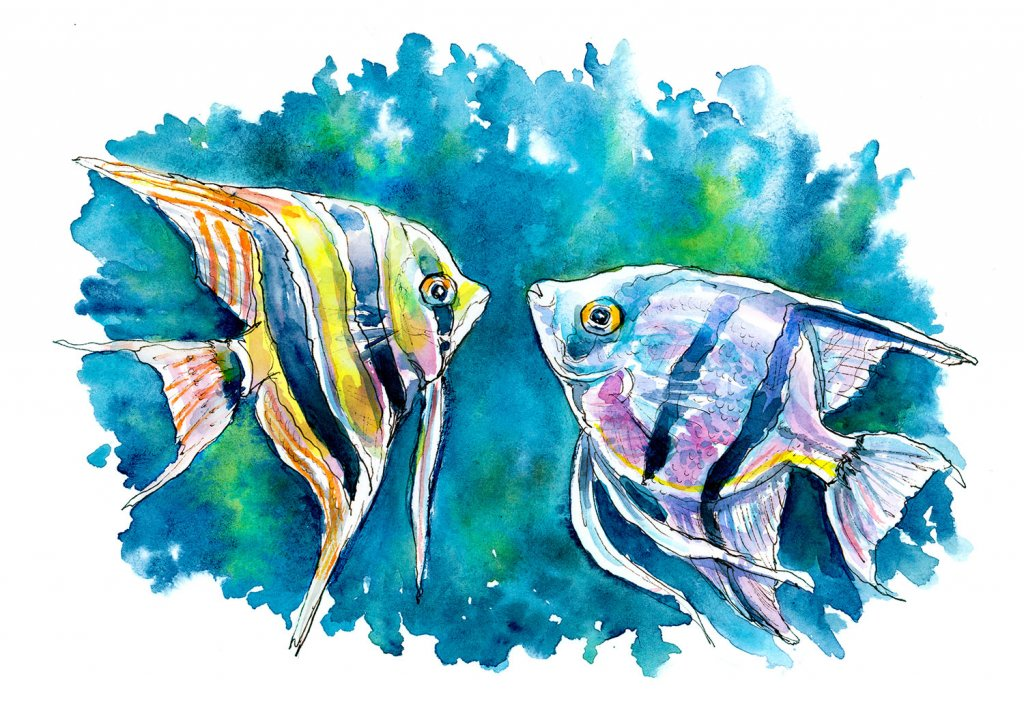 Angelfish Pair Zebra Altum Fish Watercolor Painting Illustration