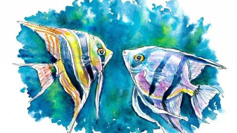 Angelfish Pair Zebra Altum Fish Watercolor Painting Illustration