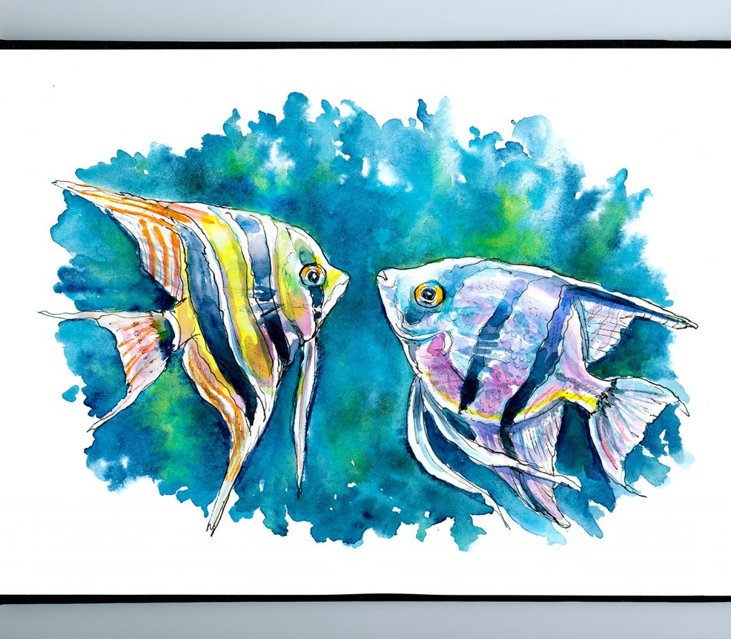 Angelfish Pair Zebra Altum Fish Watercolor Painting Illustration Sketchbook Detail