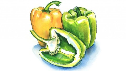 Green Pepper Yellow Pepper Watercolor Painting Illustration