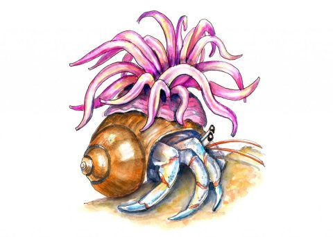 Hermit Crab And Sea Anemone Watercolor Painting Illustration