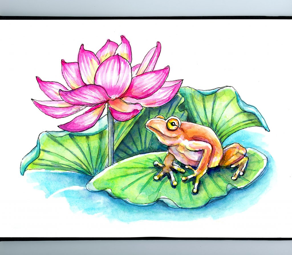 Lotus Flower And Frog Watercolor Painting Illustration Sketchbook Detail