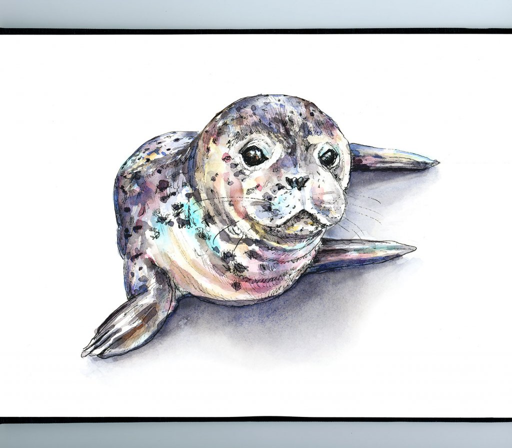Seal Baby Harbor Seal Pup Watercolor Painting Illustration Sketchbook Detail