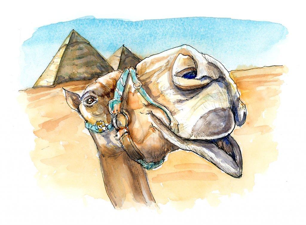 Camel Egyptian Pyramids Photobombing Watercolor Painting Illustration