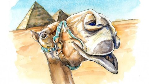 Camel Egyptian Pyramids Photobombing Watercolor Painting Illustration