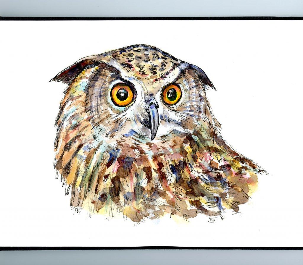 Owl Eyes Watercolor Painting Illustration Sketchbook Detail