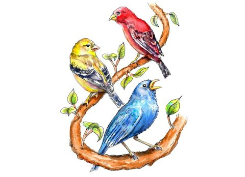Finches Primary Colors Watercolor Painting Illustration