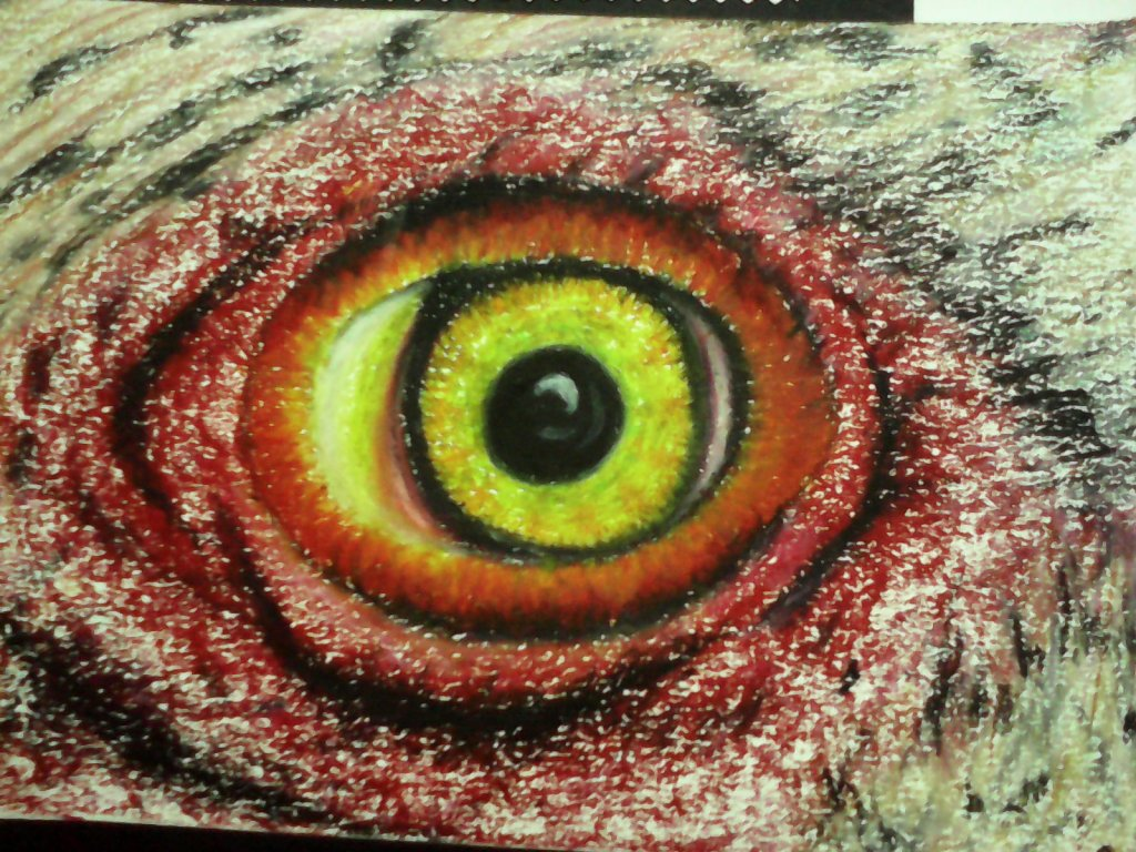 "Close up study of chicken eye 👁🐔🐓 #Doodlewash# #using oil pastel # ""Wo"