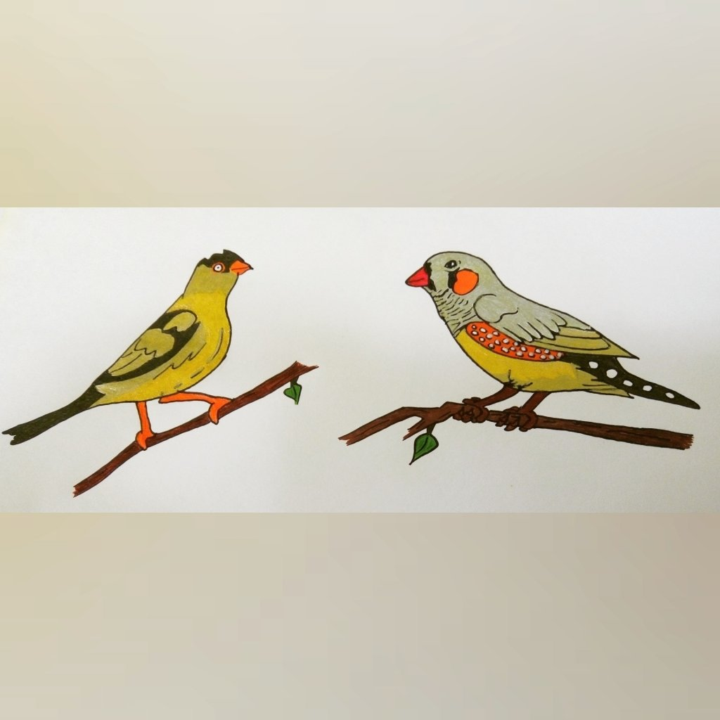 "I had a difficulty drawing the ""finch"" I tried two but I still didn't get it right Heh-heh"